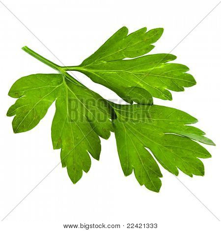 fresh leaf herb parsley isolated on white