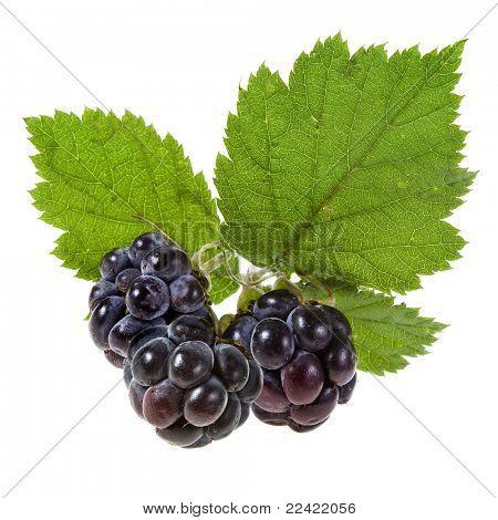 Blackberry ( dewberry )on a white background