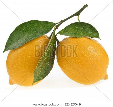 Lemon isolated on a white background