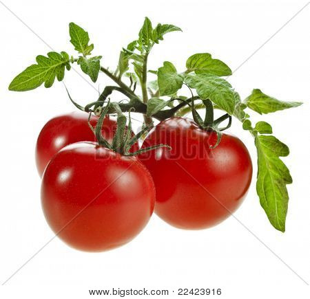 Tomaten, isolated on white background