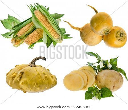 yellow color vegetables: corn ,  turnip,scallop squash,  potato  isolated on white