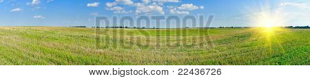 Empty  Bristly Field After Crop.