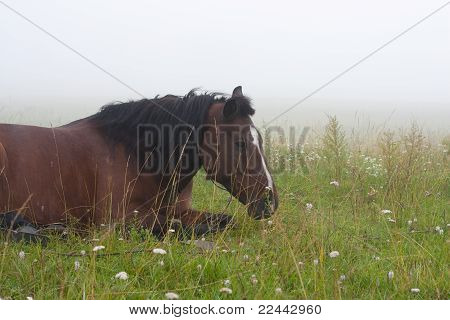 Horse In The Fog On The Grass