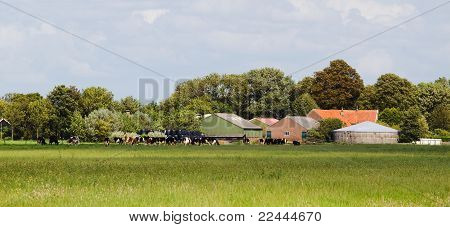 Dutch Dairy Farm With Cows