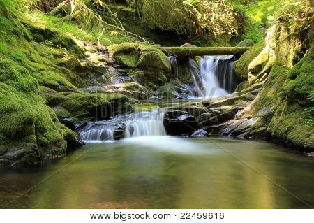 Woodland pool with waterfalls