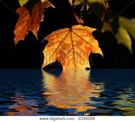 Maple Leaf And Water