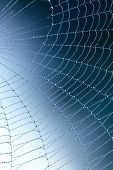 image of spider web  - Spider web with water drops - JPG