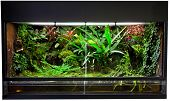 stock photo of jungle snake  - terrarium for rain forest pet animals like exotic and tropical frogs lizards and snakes - JPG