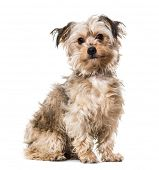 Mixed-breed dog sitting against white background poster