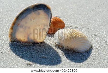 Sunlit Sea Shells