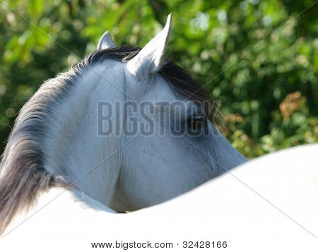Close Up Of The Eye Of A Horse
