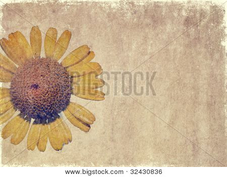 earthy floral background image and useful design element.