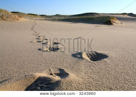 Footsteps In A Cape Cod Beach Dune