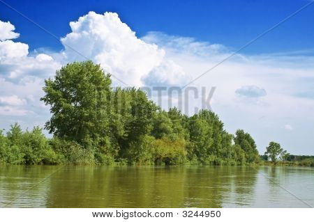 Trees On The Riverside