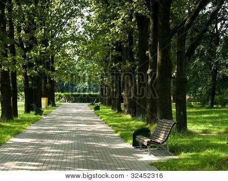flone bench in park