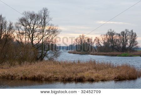 Dutch National Park De Biesbosch In Winter