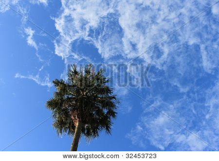 Tropical palm tree on a blue sky