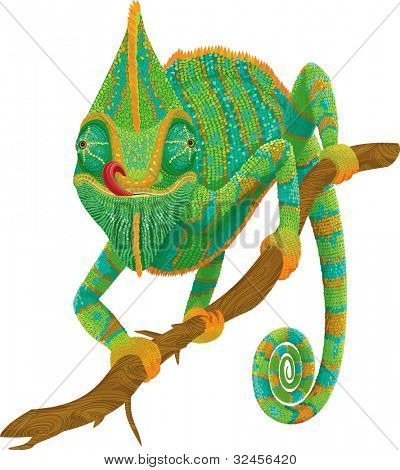 Vector illustration of a chameleon climbing on a branch isolated on  white background.