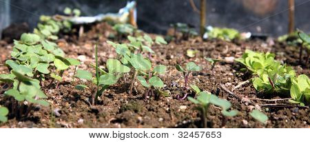 green seedling growing