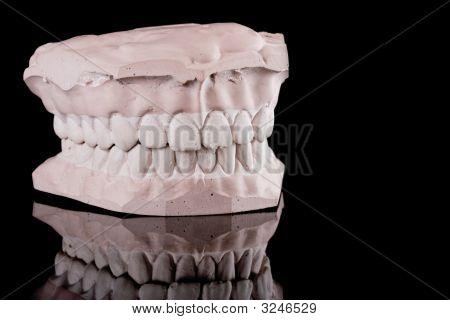 Human Teeth, Model