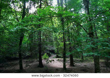Floresta Do Geres