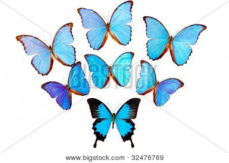 Group of colorful butterflies on white background