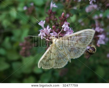 Pastel Colored Small Butterfly