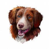 Nova Scotia Duck Tolling Retriever Dog Watercolor Portrait Digital Art. Poster With Pet Breed Name,  poster