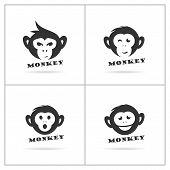 Monkey Logo Design, Monkey Vector Icon, Animal Illustration poster