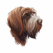 Wirehaired Pointing Or Korthals Griffon Dog Breed Portrait Isolated On White. Digital Art Illustrati poster
