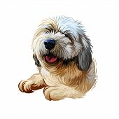 Lhasa Apso Puppy Tibetan Long-haired Purebred Digital Art. Poster With Text And Watercolor Portrait  poster