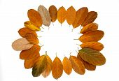 Orange Autumn Leaf On White Background. Seasonal Frame Top View Photo. Fall Season Flat Lay With Ora poster