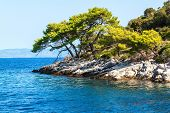Rocky Coast Of The Croatian Island Of Lastovo. Pine Trees On Seacoast. View From The Deck Of The Yac poster