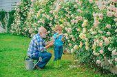 Professional Gardener At Work. Gardener Cutting Flowers In His Garden. Retirement Planning. Generati poster