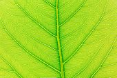 Leaf Abstract Background. Abstract Green Leaf Background For Template. Abstract Shapes For Design. A poster