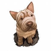 Shar Pei Purebred Type Of Dog Originated From China Digital Art. Isolated Watercolor Portrait Of Pet poster