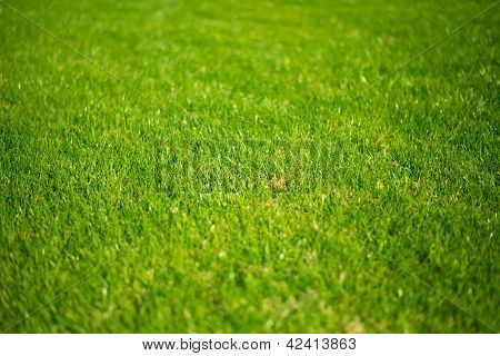 lush green lawn grass, sunny day, texture of green