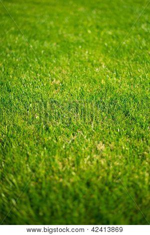 Lush green lawn grass