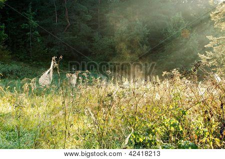 Dewy Spider Web Plants Sunlight Meadow Vapour