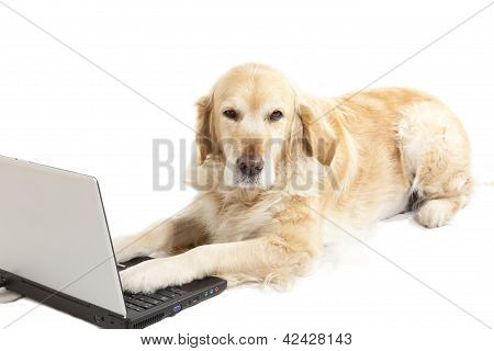 Dog With A Laptop