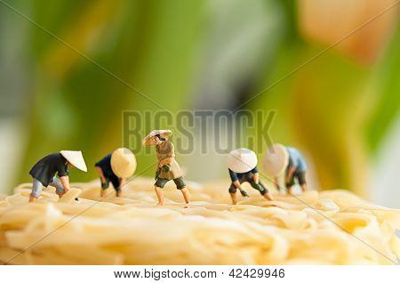 Boeren op Noodle veld