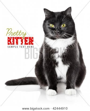 sitting black cat with yellow eye isolated on white background