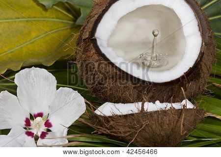 drop of milk in the coconut