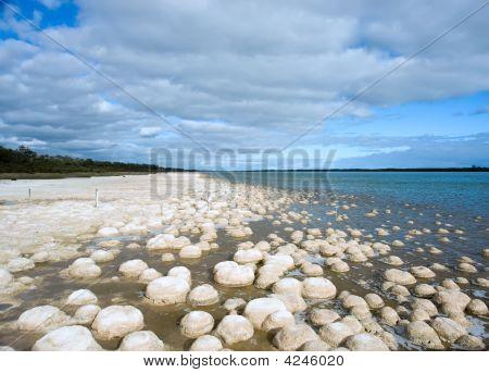 Reef Of Living Rocks