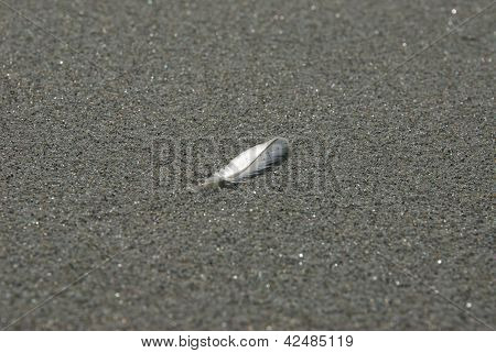 White Feather On Sand