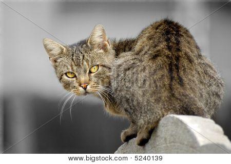 Wild Cat's Eyes