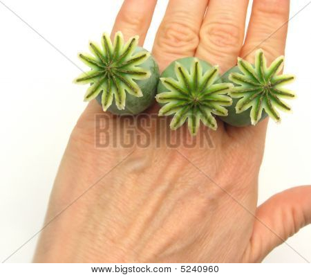 Poppy Kapseln als Finger Emblazonment auf weiß