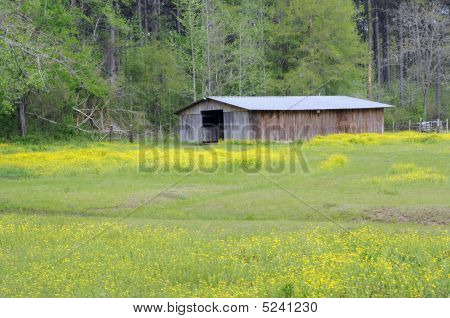 Barn Amid Wildflowers