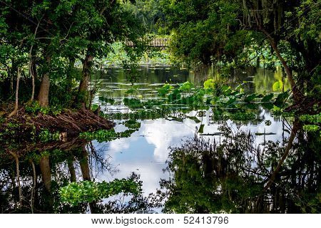 A Beautiful Nature Scene with a Fishing Dock, Glassy Lake Surface, Green Trees, and Water Lilies
