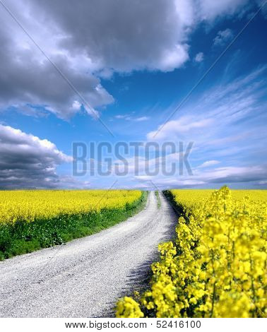 Oilseed and clouds